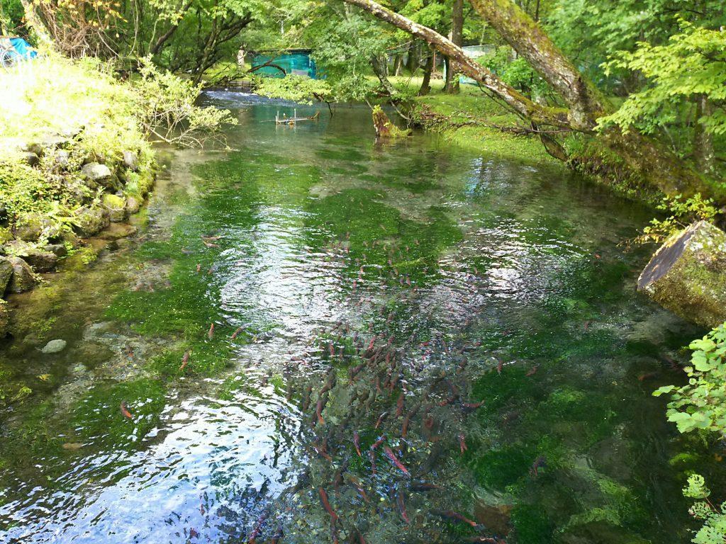 菖蒲ヶ浜キャンプ場湖畔の川