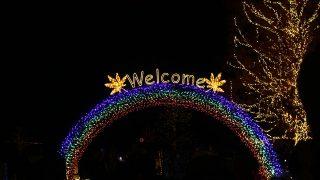 国営武蔵丘陵森林公園の紅葉ライトアップイベントに行ってみた。